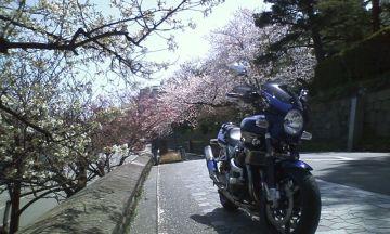 桜が散る前に | Webikeツーリング
