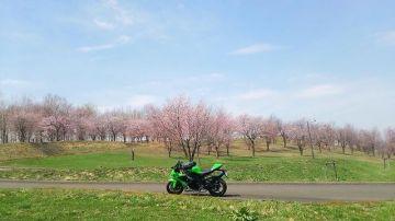 子供の日の桜と、息子の10R | Webikeツーリング