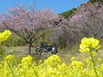 千葉はお花見シーズン突入しました... ・゚。+゜*(@・∀・)゚。+゜ | Webikeツーリング