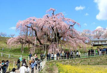 三春の滝桜&名湯・高湯温泉/早春の福島へ   Webikeツーリング