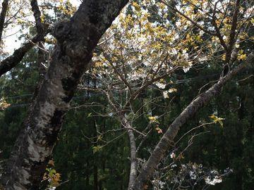 桜は川の様に 雲の様に (桜山公園) | Webikeツーリング