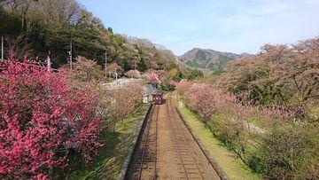 花桃と桜を見に!2年振りの渡瀬渓谷&赤城ツー☆   Webikeツーリング