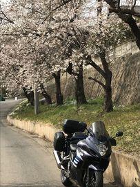 桜 探して・・お花見ツーリング・・行って来ました | Webikeツーリング