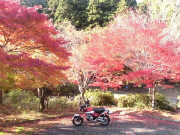 【今が旬!】2020年11月12日三重御在所岳鈴鹿スカイライン紅葉ツーリング! | Webikeツーリング
