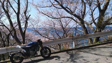 能登一周左回り 桜巡り2   Webikeツーリング