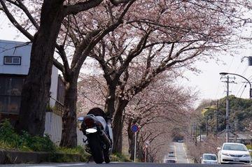 春を感じる三浦半島   Webikeツーリング