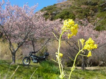 桜も咲いて、お花見ツーリング...(*≧∀≦)ノ゙ ♪ | Webikeツーリング