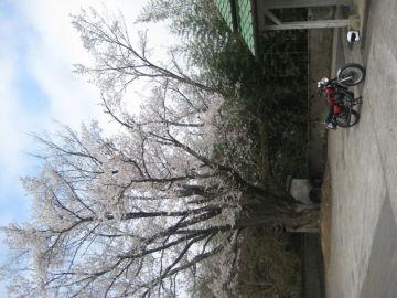 貞光桜堂横の廃校で | Webikeツーリング