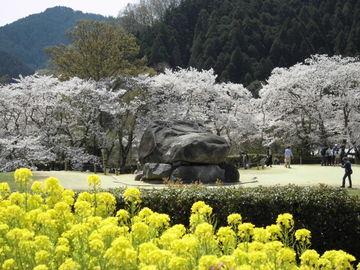 桜満開! ♪~ひとり明日香村 | Webikeツーリング