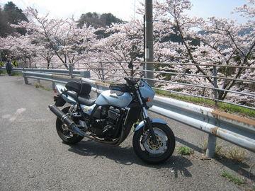 桜吹雪のなか   Webikeツーリング