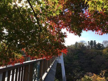 高津戸峡紅葉、美食に、美人に、スイーツに大満足 | Webikeツーリング