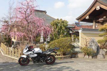 梅かほる 曽我の古刹を バイク旅!   Webikeツーリング