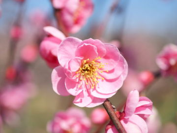 埼玉の早春をトコトコ楽しんできました♪   Webikeツーリング
