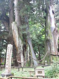 日本一の大杉!!! | Webikeツーリング