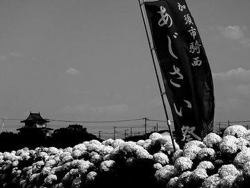 加須市騎西「あじさい祭り」へ・・・   Webikeツーリング