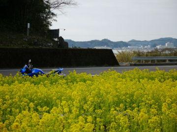 近所に菜の花観賞にお散歩♪ | Webikeツーリング