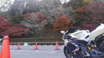 小原の四季桜 | Webikeツーリング