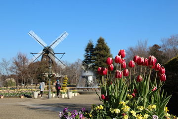 春を感じるアイスチューリップ/船橋~印旛沼へ   Webikeツーリング