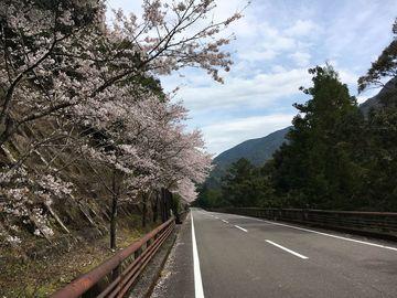 お花見ツーリング(4月9日) | Webikeツーリング