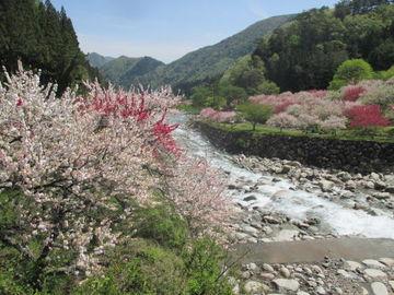 【日本一の花桃の里】と【木曽のダム】へ行ってきた! 【長野県】   Webikeツーリング