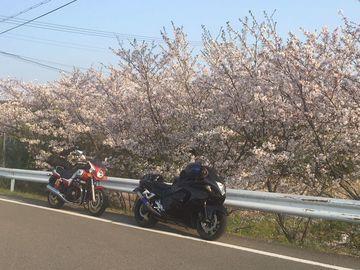 春だから!春だし!春なので!暖かいところに出かけるのさ!(笑) | Webikeツーリング