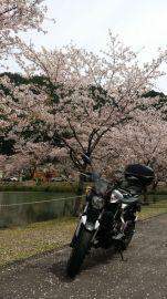 帰りはR169、桜がきれいでした。 | Webikeツーリング
