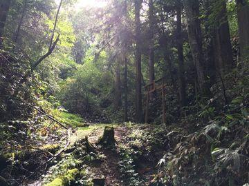 おいしい水を求めて~おたねの水~と長野県道495の終点 | Webikeツーリング