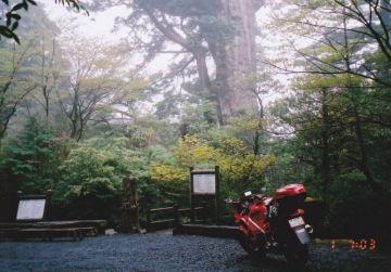 巨木の佇む森 | Webikeツーリング