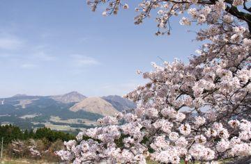 貧乏暇あり!!二日連続で阿蘇に行って、一本桜を見まくって来たぜっ!! | Webikeツーリング