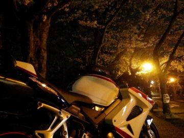 夜桜見物 | Webikeツーリング