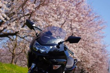 桜の前で「はいポーズ」。 | Webikeツーリング