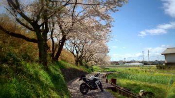 【桜フォトコン】Z250と桜日和 | Webikeツーリング