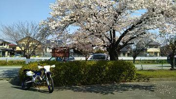 花見散歩ツーリング | Webikeツーリング
