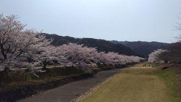 桜ツーリング | Webikeツーリング