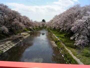 車検と銀行と桜 | Webikeツーリング