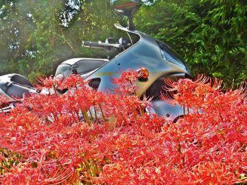 秋を見つけに・・・近所をブラリ <(゚-゚=)(=゚-゚)ゞ | Webikeツーリング