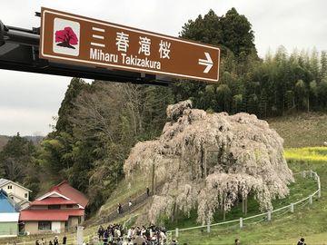 三春瀧桜オフ | Webikeツーリング