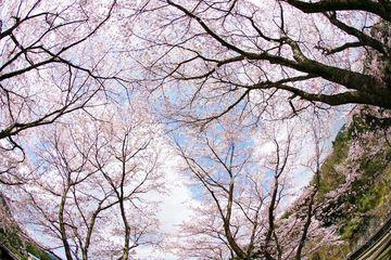 カブで北九州の桜咲く駅巡り^^ | Webikeツーリング