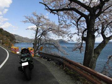2019 奥琵琶湖「海津大崎の桜並木」~西浅井マキノ線 | Webikeツーリング