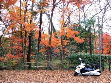 12/2(日)-3(月)一泊二日の紅葉キャンプ「月川荘キャンプ場」 | Webikeツーリング
