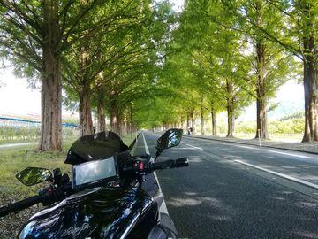 滋賀県メタセコイヤ並木へ! | Webikeツーリング