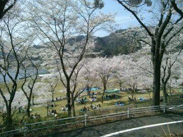 桜の名所巡り   Webikeツーリング