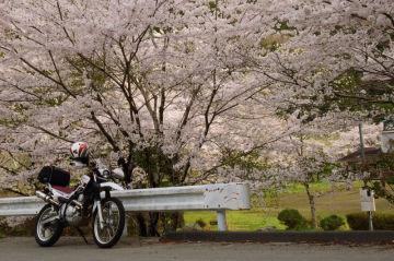 東秩父 花見と林道のショートツーリング | Webikeツーリング