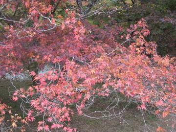 愛媛松山から面河渓までの紅葉 | Webikeツーリング