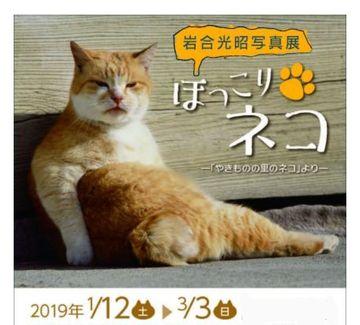 猫個展に行きます | Webikeツーリング