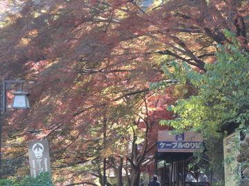 ~吉野山~  (桜じゃないよ!紅葉編) | Webikeツーリング