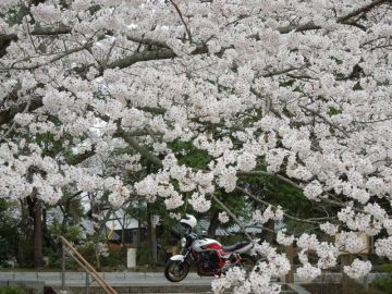 ライダー3号と一緒に桜鑑賞! | Webikeツーリング