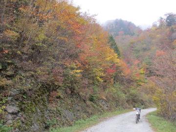 愛媛県と高知県の県境、寒風山近くの林道での1枚 | Webikeツーリング