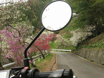 花いっぱいな春の南信州 | Webikeツーリング