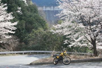 桜探しのシェイクダウン | Webikeツーリング